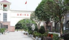 西蜀·银杏康乐园
